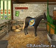 Paard & Pony – Paard in Galop